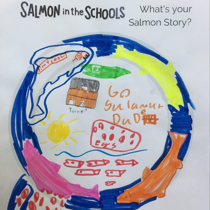 Student drawing exploring salmon stories